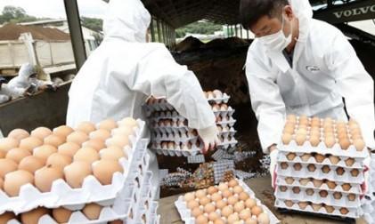살충제 달걀 농장 3곳 추가 적발