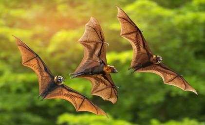 박쥐는 가장 흔한 바이러스 감염 매개체 (연구)