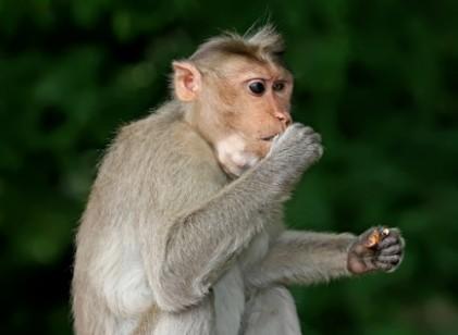 北, 기술 입증하려 원숭이 태워 미사일 쏠까