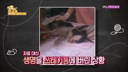 집고양이-길고양이를 구분하는 목걸이  12회
