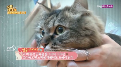 고양이를 위한 신체 부위별 마사지 Tip  3회