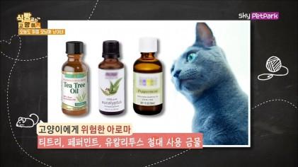 고양이 키우는 집, 향초 사용 주의할 점  12회