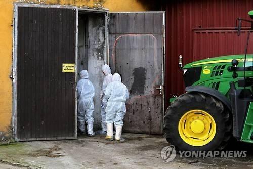 유럽 돼지전염병 무엇?…'100% 죽는다'