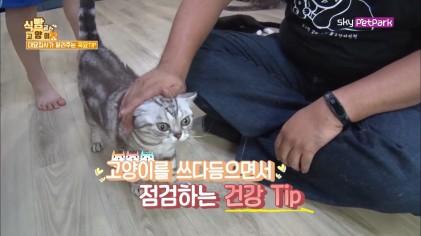 고양이 건강체크 TIP  4회